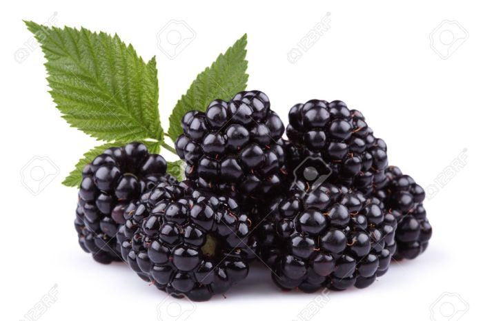 Blackberries – Caught In  A Bad Romance